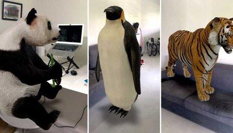 Thủ thuật đưa con vật 3D vào khung hình điện thoại, đưa hình ảnh 3D vào điện thoại