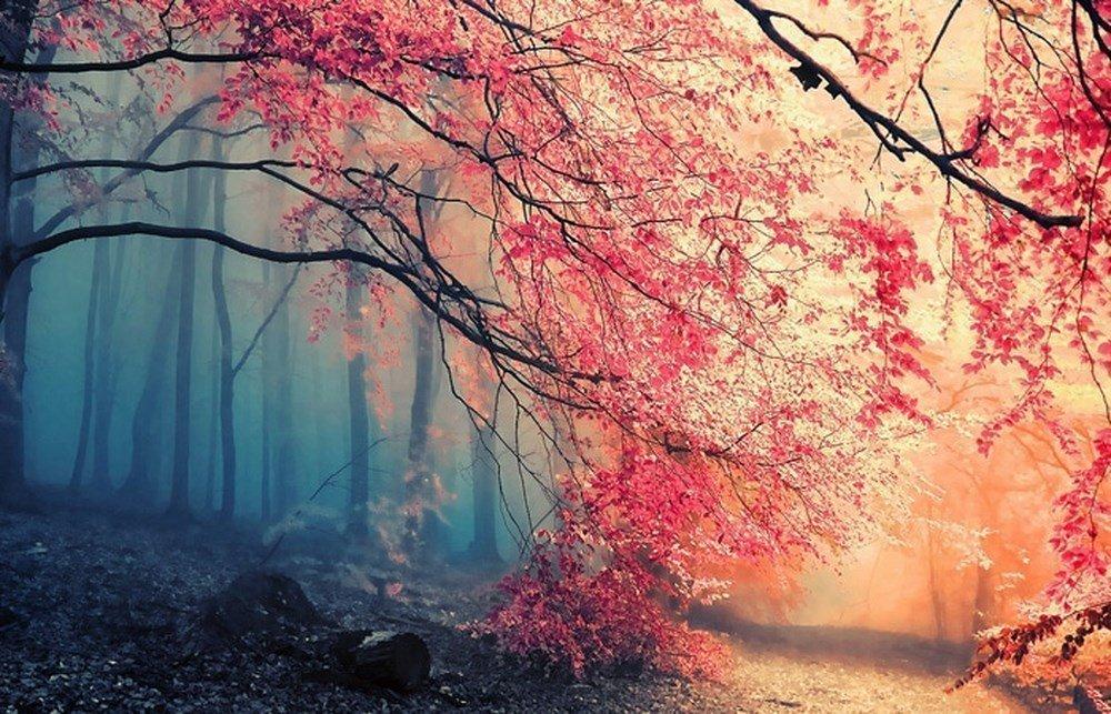 Kết quả hình ảnh cho phong cảnh đẹp