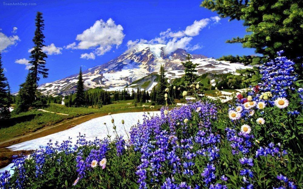 Tải Hình Nền Mùa Xuân Cho Máy Tính